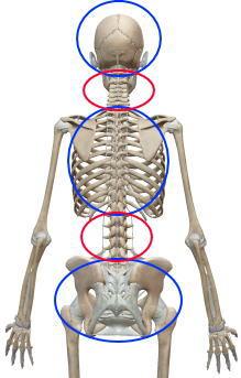 背骨と腰痛の関係