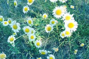 野花のような自然な笑顔へ